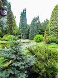 Schöner Garten mit Nadelbäumen und einem Teich lizenzfreies stockbild