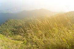 schöner Gebirgswald und -blumen auf Bergwiese, blurre Stockbilder