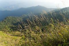 schöner Gebirgswald und -blumen auf Bergwiese, blurre Stockfoto