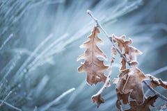 Schöner gefrorener Baumast mit toten Blättern Stockfotos