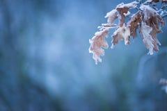 Schöner gefrorener Baumast mit toten Blättern Lizenzfreies Stockfoto