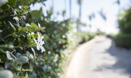 Schöner Gehweg in Mexiko Stockfotografie