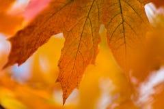 Schöner gelb-orangeer roter Herbstlaubhintergrund Stockbild