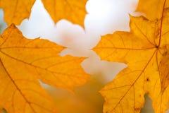 Schöner gelb-orangeer roter Herbstlaubhintergrund Stockfoto