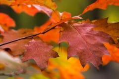 Schöner gelb-orangeer roter Herbstlaubhintergrund Stockfotos