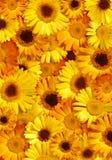 Schöner gelber Blumenhintergrund stockbilder