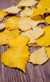 Schöner gelber Herbstlaub lokalisiert auf hölzernem Hintergrund Stockfotografie