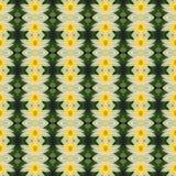 Schöner gelber Lotos in voller Blüte nahtlos vektor abbildung