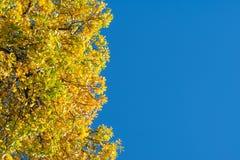Schöner gelber und grüner Herbstlaub auf einem Baum auf dem links Stockfotografie