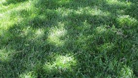 Schöner glatter und grüner Rasenpark in Baku Frischer Schuss des grünen Grases stock footage