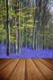 Schöner Glockenblumewald des Morgens im Frühjahr mit Sonne strahlt throu Lizenzfreie Stockfotografie