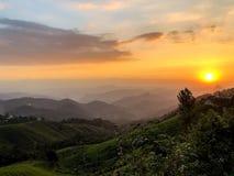 Schöner goldener Sonnenuntergang auf Teezustand stockbild