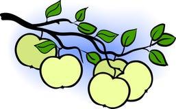 Schöner grüner Apfelzweig des Baums und des blauen Himmels Stockfotos