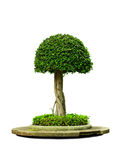 Schöner grüner Baum Lizenzfreies Stockbild
