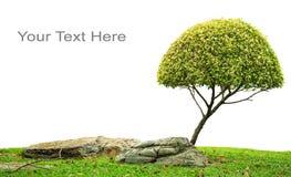 Schöner grüner Baum Stockbilder