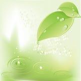 Schöner grüner Blathintergrund lizenzfreie abbildung