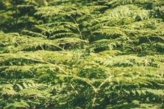 schöner grüner Farn verlässt unter Sonnenlicht im Wald - vint Stockbilder