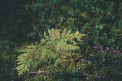 schöner grüner Farn verlässt unter Sonnenlicht im Wald - vintag Lizenzfreie Stockfotografie