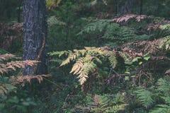 schöner grüner Farn verlässt unter Sonnenlicht im Wald - vintag Lizenzfreie Stockbilder