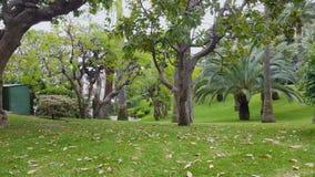 Schöner grüner Garten in der Nizza Urlaubsstadt, Erholung in Frankreich, Natur stock footage