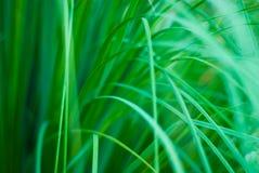 Schöner grüner grasartiger abstrakter Hintergrund Lizenzfreie Stockfotografie