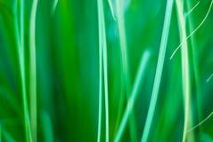 Schöner grüner grasartiger abstrakter Hintergrund Lizenzfreie Stockfotos