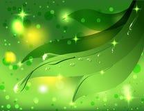 Schöner grüner Hintergrund mit Blättern und Tau dro Lizenzfreie Stockbilder