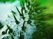 Schöner grüner Kiefernkegel verlässt gefroren in der Eisbeschaffenheitstapete Stockfoto