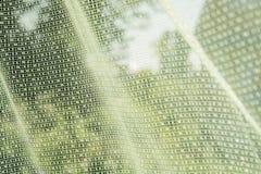Schöner grüner Vorhang entwickelt sich in der Windaußenseite stockfoto