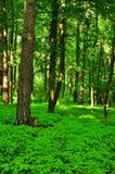 Schöner grüner Wald Stockfoto