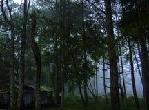 Schöner grüner Wald lizenzfreies stockfoto
