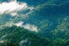 Schöner grüner Wald im Nebel nach Regen Lizenzfreies Stockbild