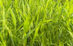 Schöner Grasabschluß oben Stockbilder