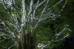 Schöner großer Baum verziert mit Lichtern Lizenzfreie Stockfotografie
