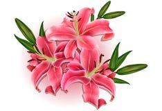 Schöner Gutschein mit rosa Lilien Stockfoto