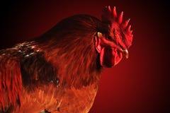 Schöner Hahn auf rotem Hintergrund Stockfotos