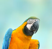 Schöner Haustier-Papagei Lizenzfreie Stockbilder