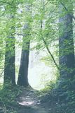 Schöner heller Wald mit einer kleinen Bahn lizenzfreie stockbilder