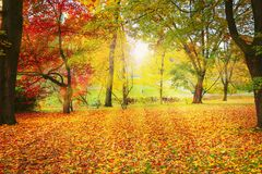 Schöner Herbst Lizenzfreies Stockfoto