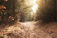 Schöner Herbst - auf dem Pfad im Wald Stockbild