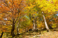 Schöner Herbst in den bayerischen Alpen Stockbilder