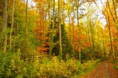 Schöner Herbst in Hohenzollern-Schloss und herum, Deutschland Stockbild