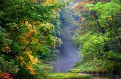 Schöner Herbst-Morgen stockfotos