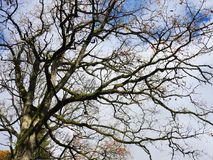 Schöner Herbstbaum, Litauen Stockfotografie