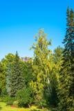 Schöner Herbstbereich im Park von Peterhof Stockbild