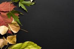 Schöner Herbsthintergrund Stockbild