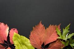 Schöner Herbsthintergrund Lizenzfreie Stockfotos