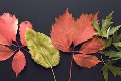 Schöner Herbsthintergrund Lizenzfreie Stockfotografie
