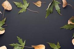 Schöner Herbsthintergrund Stockbilder