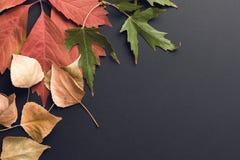 Schöner Herbsthintergrund Stockfotografie